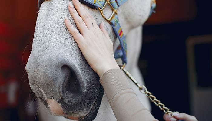 equi'forme massage chevaux et bien-être équin massage sportif équin soins énergétique shiatsu acupression stretching pour chevaux massage pour chevaux préparation sportive du cheval et détente physique et émotionnelle, tendinite, alodis care, huiles essentielles pour chevaux, reverdy, esprit horse, ravene, produits à base de plantes pour chevaux, produuits de soins naturels