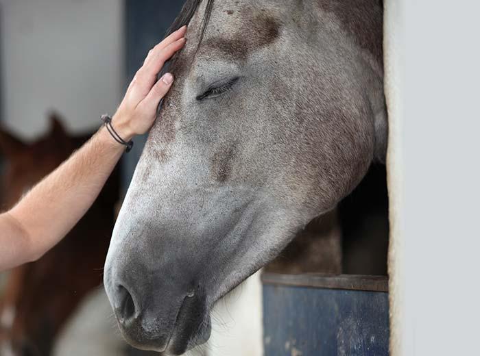 Soin énergétique pour chevaux à Arras